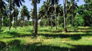 Eco friendly land for sale