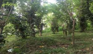 Kurunagala residential land for sale
