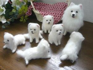 Pure Japanese Spitz puppies