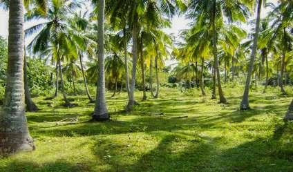 05 Acres Coconut Land for Sale
