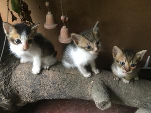 Kittens for kind home