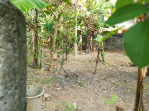 Land for sale at Kalubowila