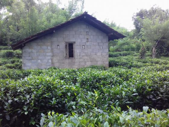 Tea land for sale