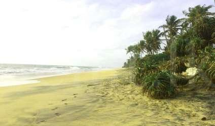 Land for Sale in Pamunugama