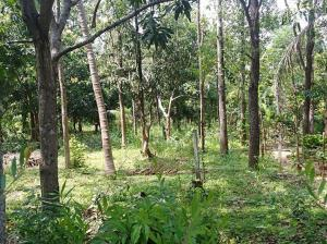 Land for sale in Dabulla