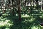 LAND FOR SALE IN DOMPE