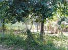 Land in Ganemulla Bollatha for Sale – 7.70P