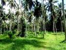 Land for sale in badalgama