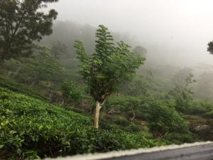10 acres tea land for sale in Kegalle