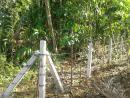 Land for sale in Gonapinuwala