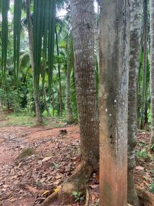 Rubber and Coconut land for sale